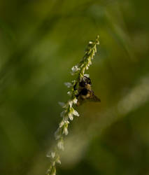 Seeking Pollen by shatteredhaven
