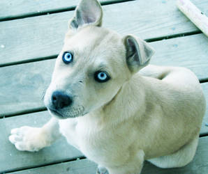 My Puppy Toby by solagratia