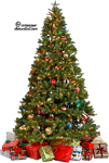 Xmas tree png 7