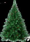Xmas pine tree png 15