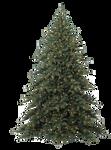 Xmas tree png 16