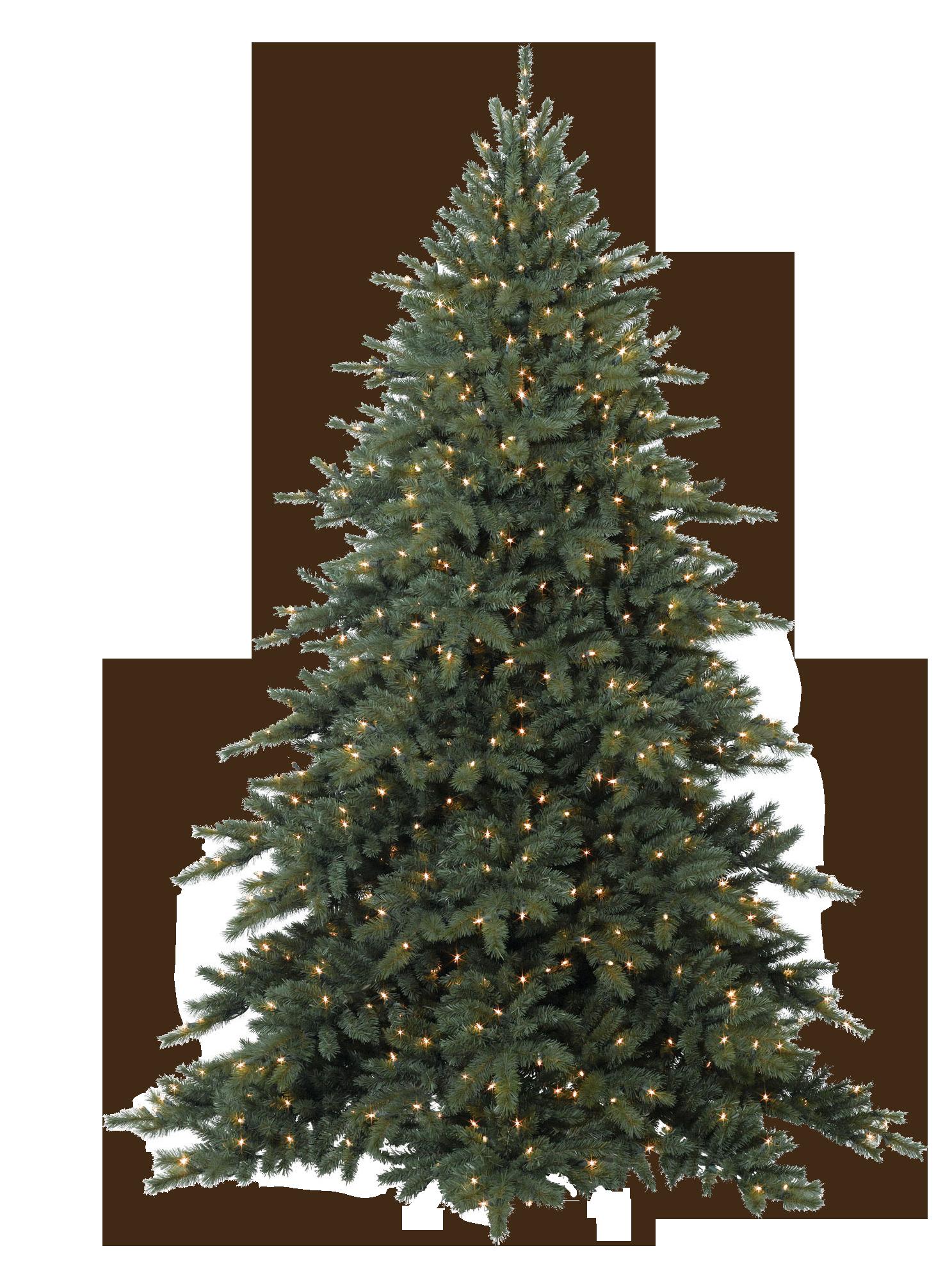 Pinus tree png download