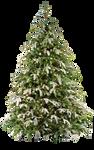 Xmas tree png 17