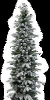 Xmas pine tree png 20