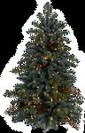 Xmas tree png 22