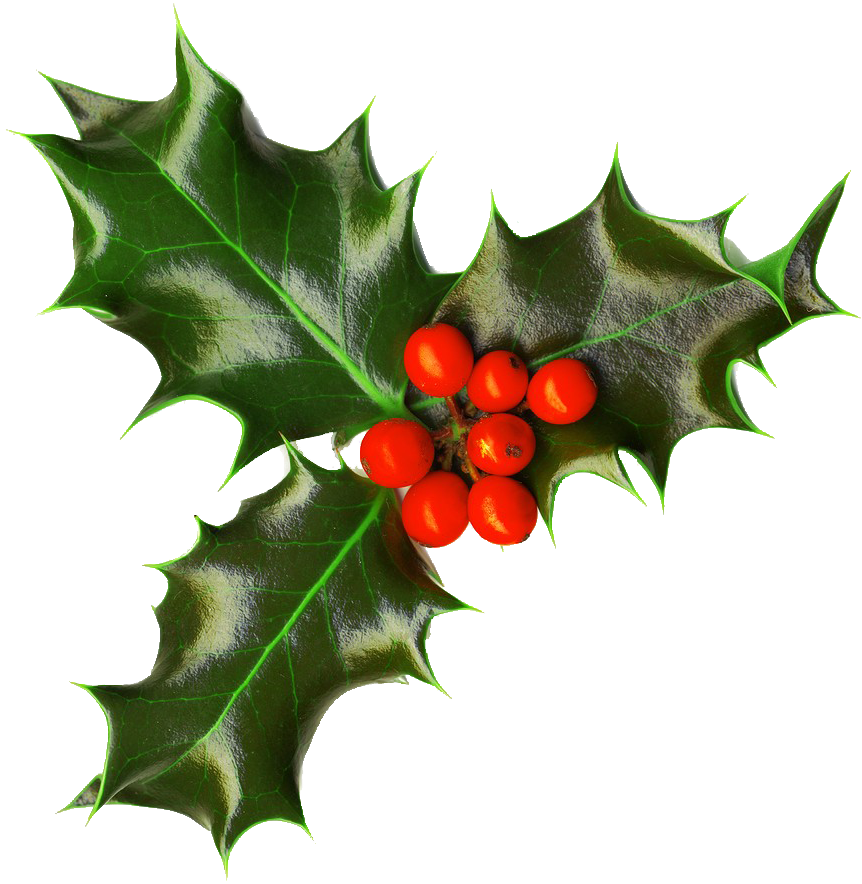 Image result for xmas holly