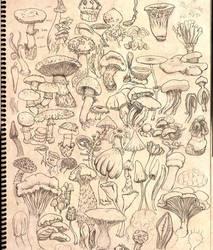 Fungi by mamasio
