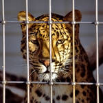 let me out of here by augenweide