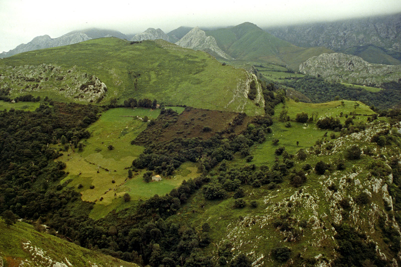 green land by augenweide