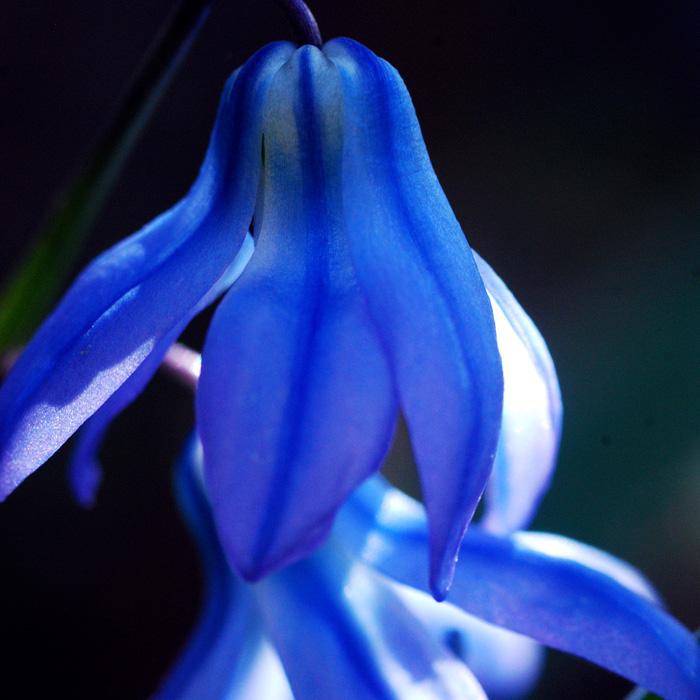 blue by augenweide