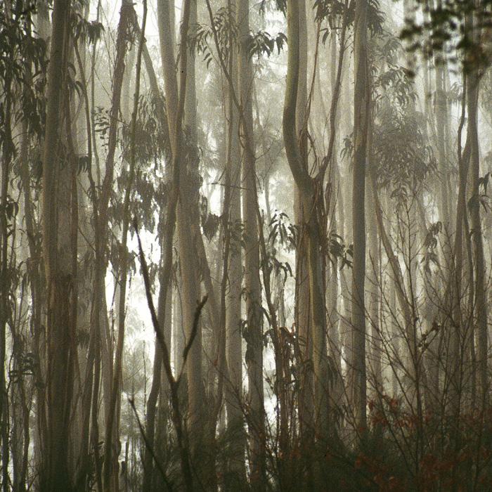 eukalyptus jungle by augenweide on deviantart. Black Bedroom Furniture Sets. Home Design Ideas