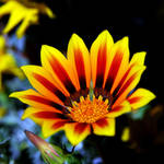 florescence by augenweide