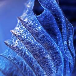 blue light by augenweide