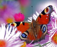 butterfly 3 by augenweide