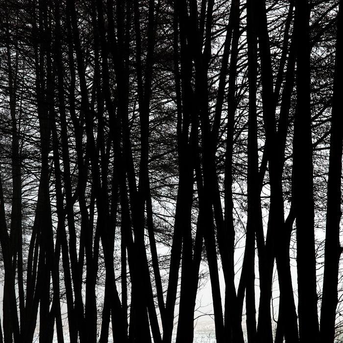 blackwood by augenweide