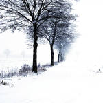 winter is coming by augenweide