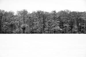 edge of forest by augenweide