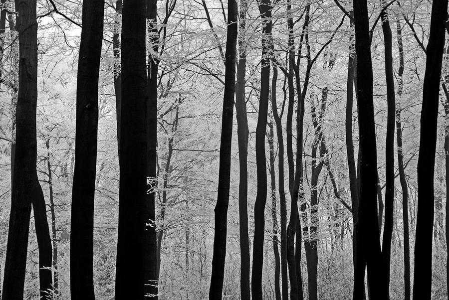 dark wood by augenweide