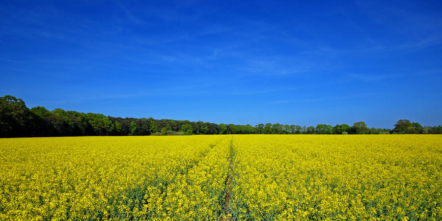 yellow and blue by augenweide