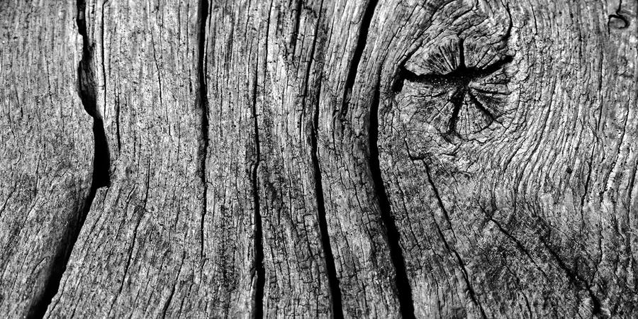 old piece of wood by augenweide