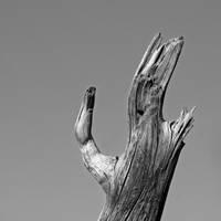 three fingers by augenweide