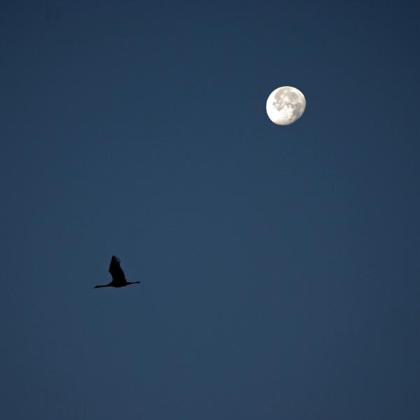 twilight by augenweide