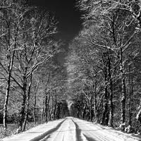 winterwonderland by augenweide