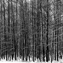 winter sleep by augenweide