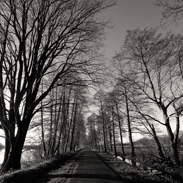 long road by augenweide