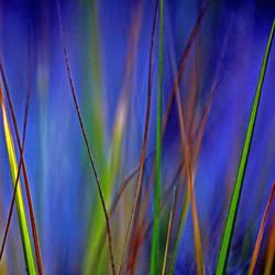 bluegras by augenweide