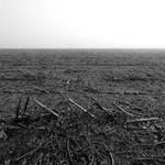 battlefield by augenweide