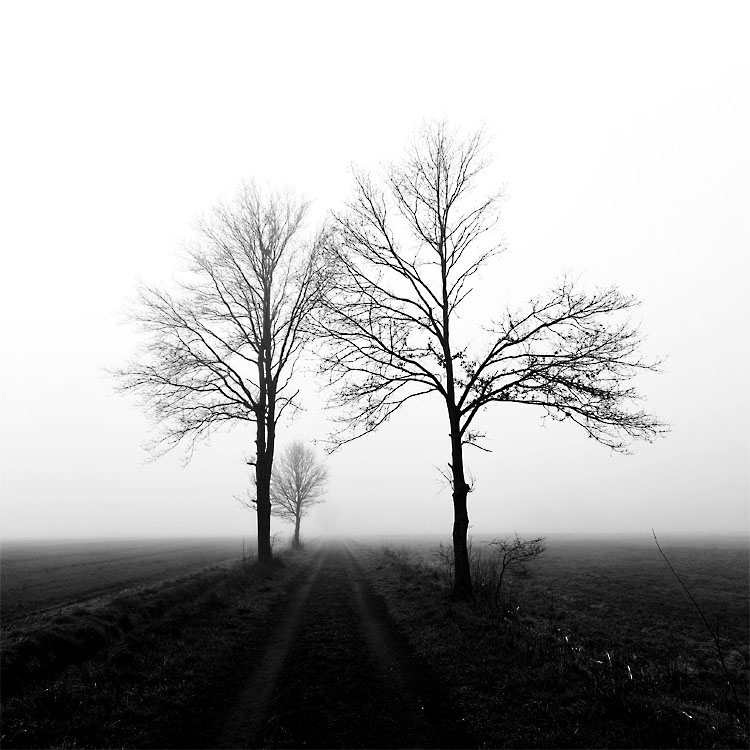 foggy evening by augenweide