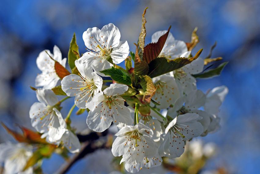springflash by augenweide
