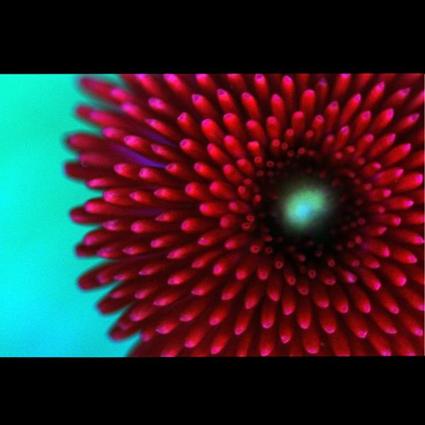supernova by augenweide