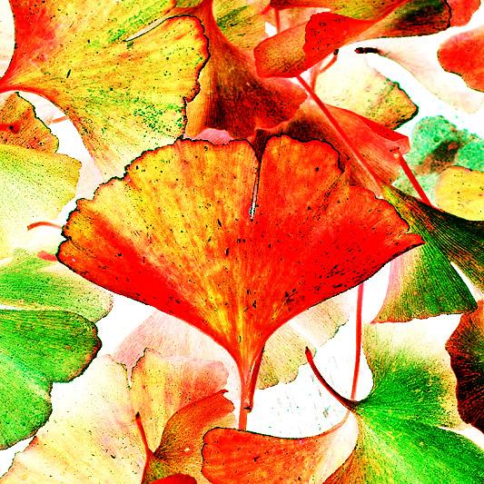 colourdance by augenweide