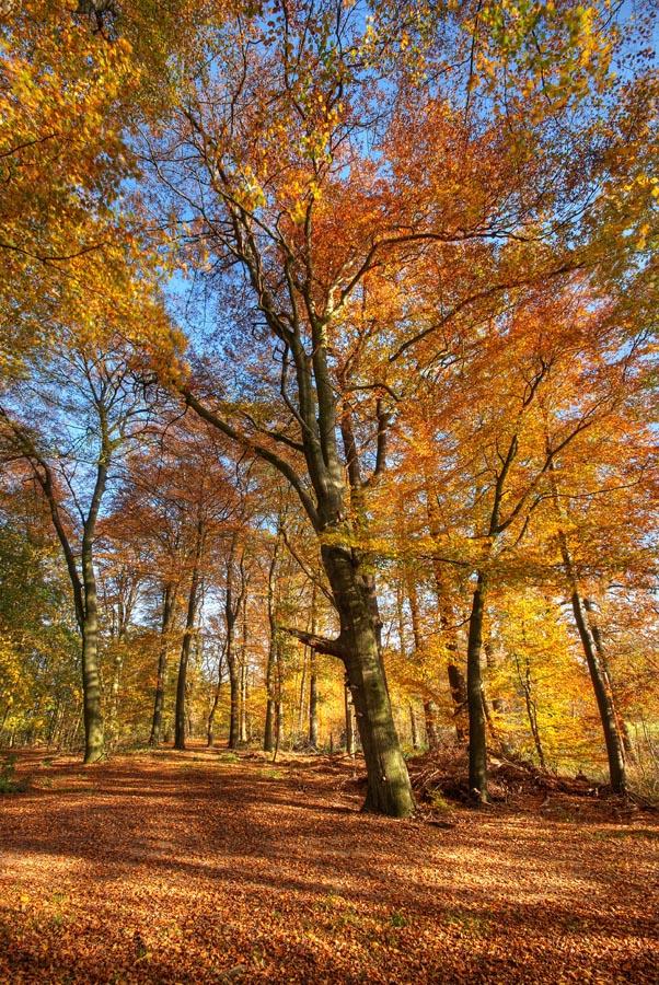 autumnforest by augenweide