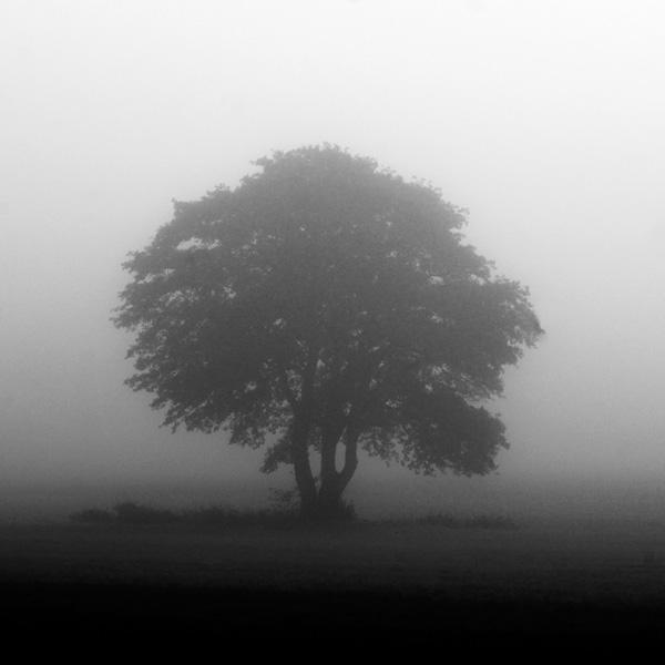 silentness by augenweide