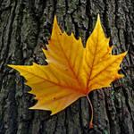 autumn salutation