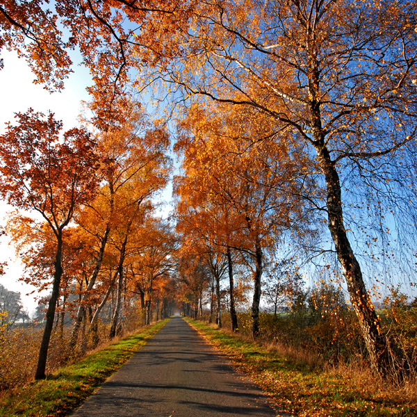 autumn road by augenweide