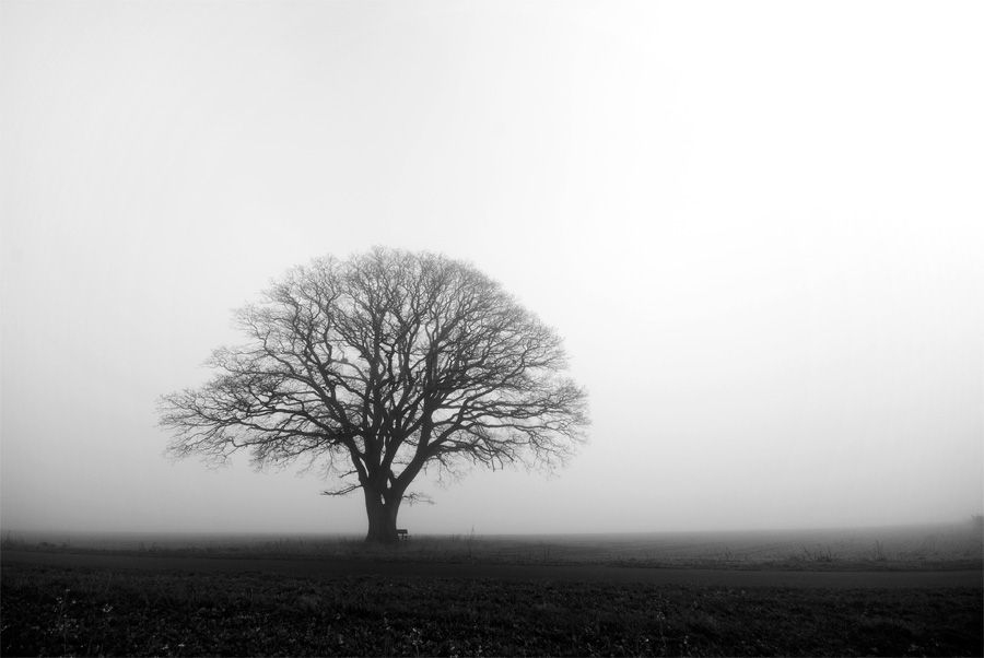 this morning by augenweide