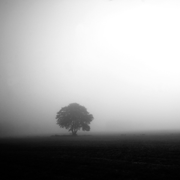the tree bw by augenweide