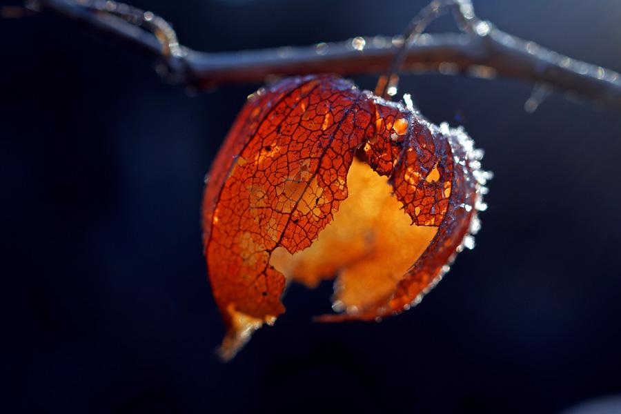 red lantern by augenweide