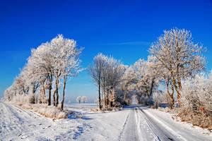 wintercolours by augenweide