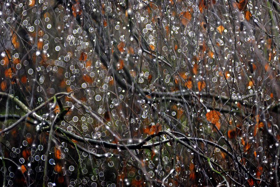 rain by augenweide