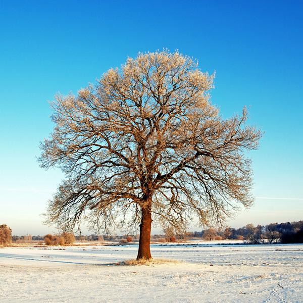 good morning oak by augenweide