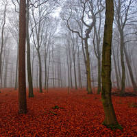 Red Song by augenweide