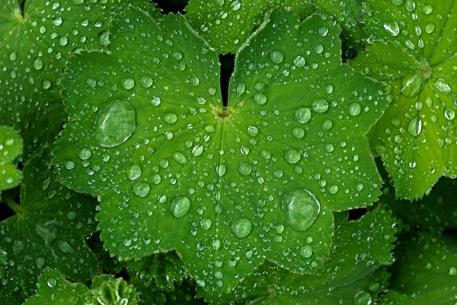 drop of rain by augenweide