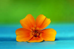 blue and orange and green by augenweide