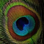 blue eye by augenweide