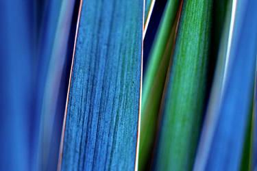 blue gras by augenweide